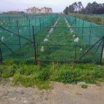 frutticoltura tropicale_protezione dal freddo