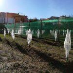 Frutticoltura tropicale_protezione dal vento