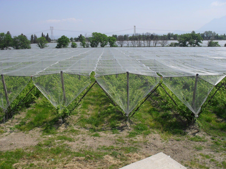 Utility anti hail nets
