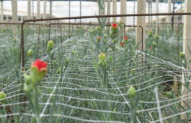 FLORICULTURE AND HORTICULTURE NETS