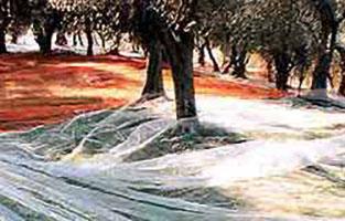 reti raccolta olive
