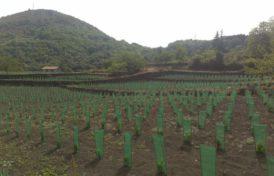 FILET DE PROTECTION DES PLANTES